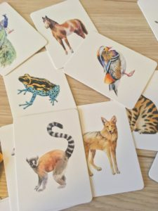 Variety of cards with images of wild animals on